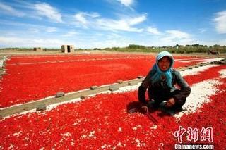 今年前十月青海省农产品出口1.25亿