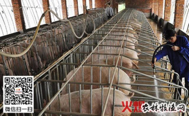 猪使用饲料中毒解救办法