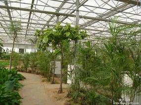 温室蔬菜喷肥技巧
