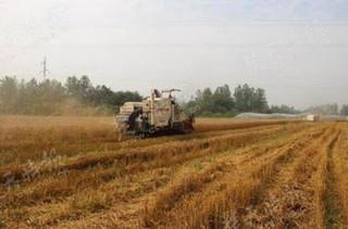 小麦秸秆切碎直接还田技术要点