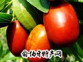 柳林大红枣