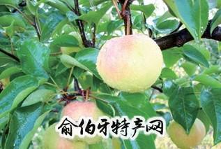 延边苹果梨