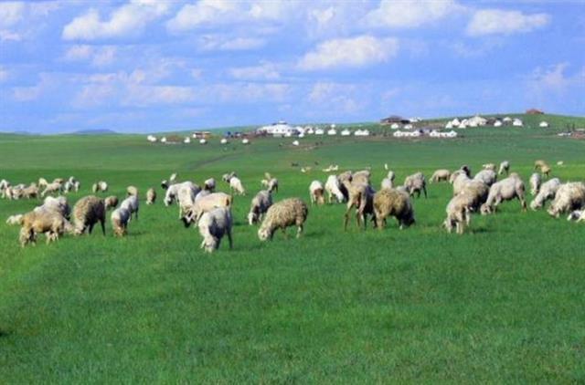 农业部:打造畜牧业新模式