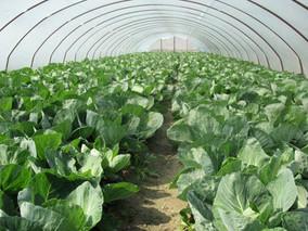 《湖北省乡村振兴促进条例》征求意见 拟规定支持建设蔬菜、小龙虾等农业全产业链