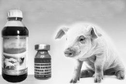 病猪的给药方法