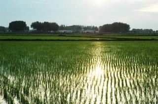 调结构 谋创新 稳产量 白城四项举措做大做强水稻产业