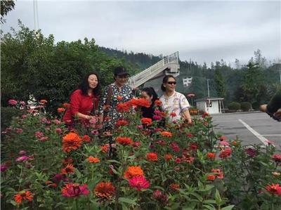重庆奉节加快林业发展为乡村振兴添动力