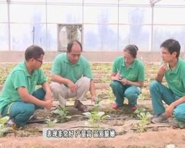 天津市推进现代都市型农业绿色发展
