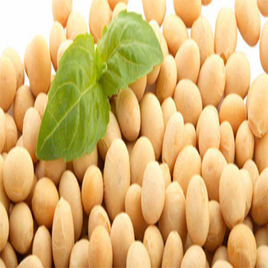 美国大豆现货市场上涨