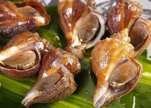 海螺厣的功效与作用