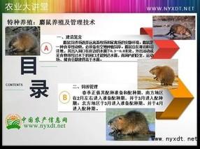 特种养殖:麝鼠养殖及管理技术