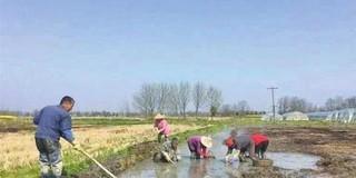 芜湖村民数万斤荸荠滞销愁坏农户