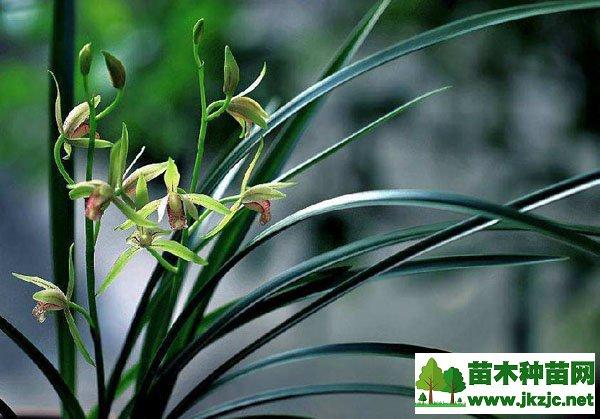 兰花品种有哪些?中国名贵兰花品种大全
