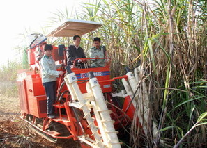 广西扶绥:192台甘蔗收割机投入收割甘蔗