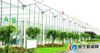 亚洲最大智能玻璃温室:亩产值超百万元