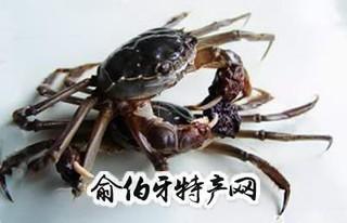 黄湖大闸蟹
