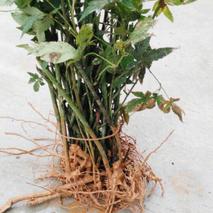 绿色发展推进品质提升 广西果甜茶香菜青翠