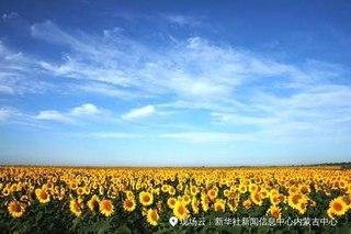 世界向日葵产业发展论坛将在内蒙古五原县举行
