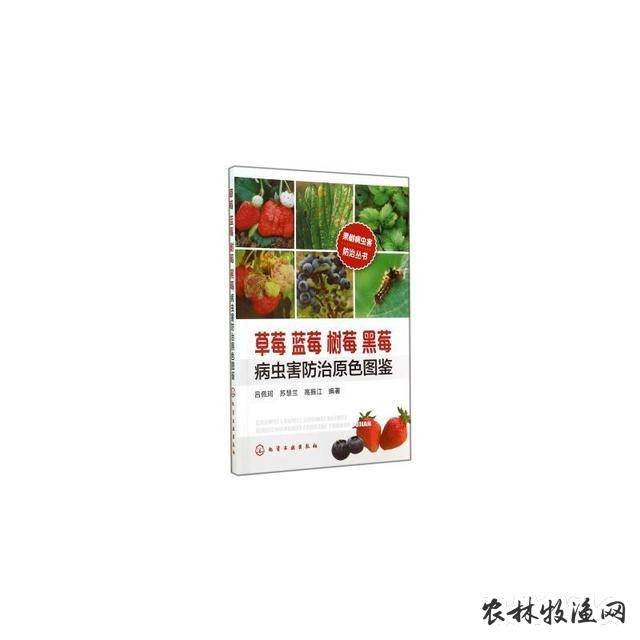 黑莓害虫斑须蝽防治法