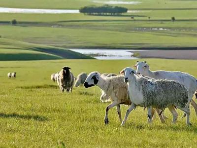 论我国畜牧业可持续发展