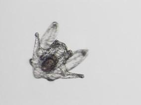 海洋酸化严重影响海胆繁殖能力