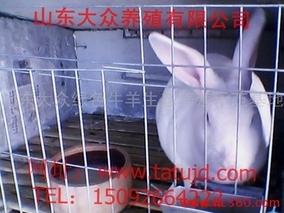 养兔高产稳产技术