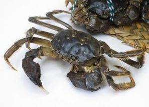 中华绒螯蟹的捕捞技术