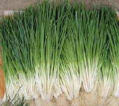小葱、分葱、细香葱的栽培