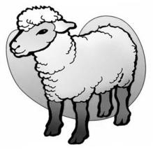 怎样利用糟渣饲喂羊