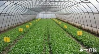 蔬菜大棚适合大面积种植