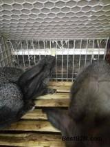 种兔的饲养管理