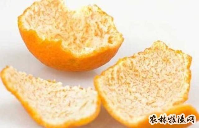 柑桔皮作饲料添加剂