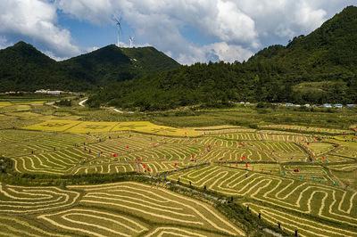 农业生产形势较好,夏粮再获丰收