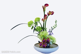 百合紫菀汤的功效与作用