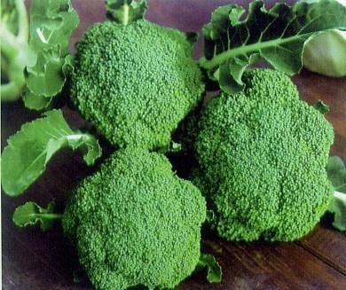 冬季种植青花菜种植方法