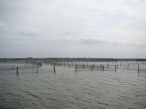 怎样提高围网养蟹回捕率