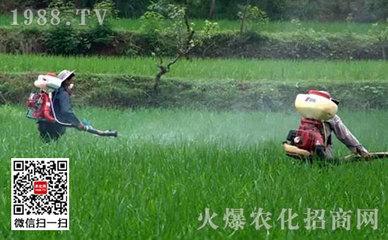 农药稀释的方法及注意要点