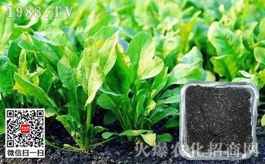湖北省畜牧良种场试验粪肥替代化肥
