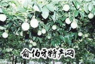 绿鲜冠巴西果王汁