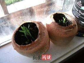 椰子壳的功效与作用