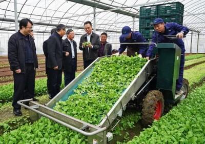 四个菜农三百岁:上海大力推进蔬菜生产机器换人