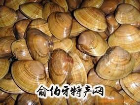 莱阳五龙河河蚬