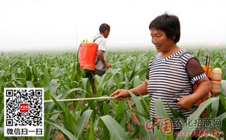高温季节使用农药八注意