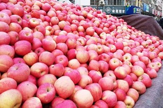 苹果的种植条件和培植方法
