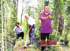 打造果桑基地又搞林下经济 渝北这个村脱贫致富有措施有成效