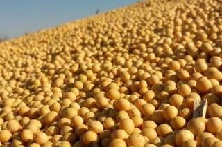 2021年大豆价格多少钱一斤?大豆价格为何上涨?