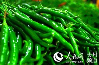 毕节威宁:极速5分排列3蔬菜产业托起群众增收致富梦
