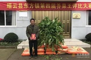"""东方镇新一届""""芥菜王""""新鲜出炉 一株重62.4斤"""