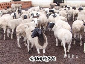 阿鲁科尔沁羊肉