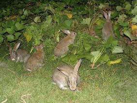 如何买到好种兔
